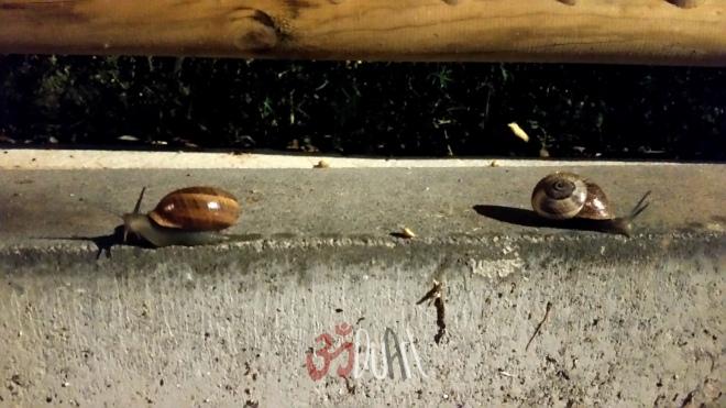 SnailsAndRaining